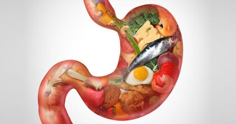 الجهاز الهضمي ومقاومة الأخطار الصحية رحلة الطعام من البداية إلى النهاية صحة جريدة اللواء